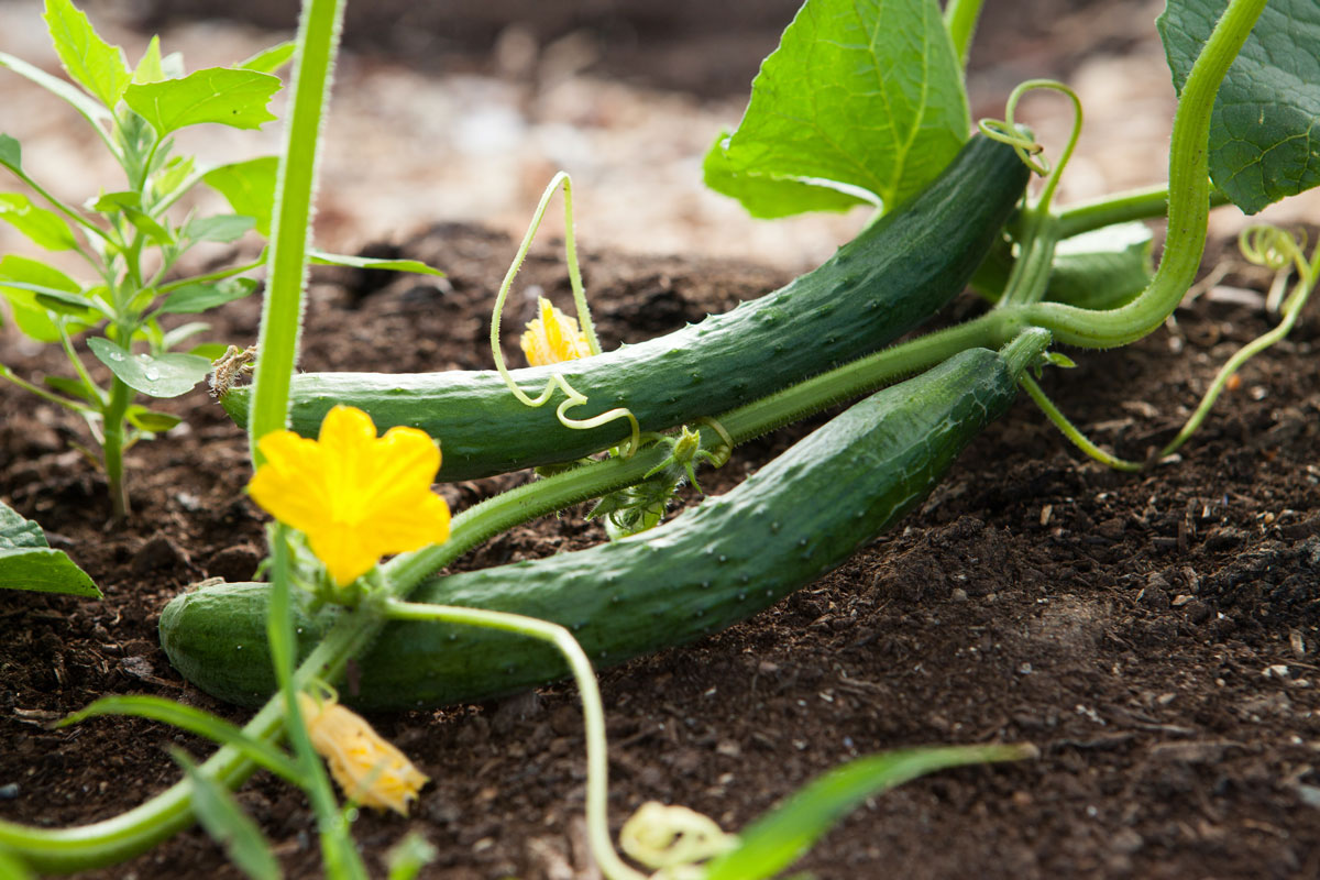 Low Waste Vegetable Gardening